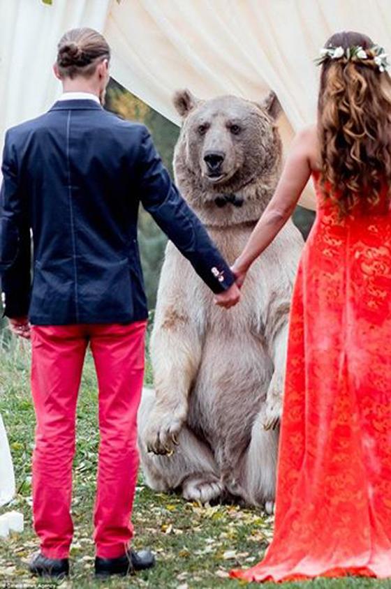 حفل زفاف بحضور صديقهما الدب